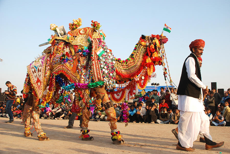 Bikaner-Camel-Festival